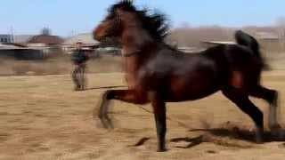 Самая маленькая лошадь на планете