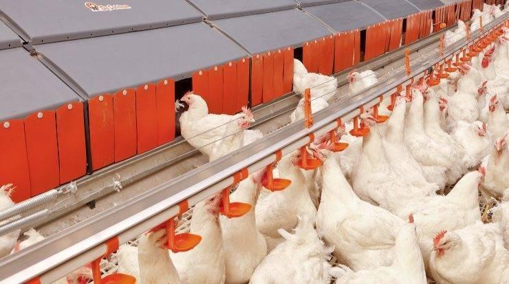 Разведение кур, образец бизнес плана