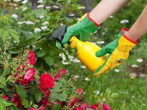 Обработка сада железным купоросом весной и осенью