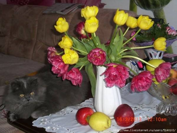 Почему у тюльпанов один лист