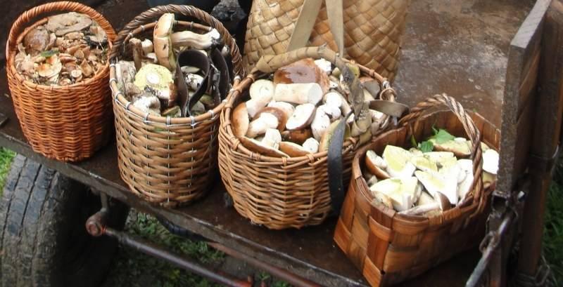 Какие бывают съедобные грибы? список, описание и фото