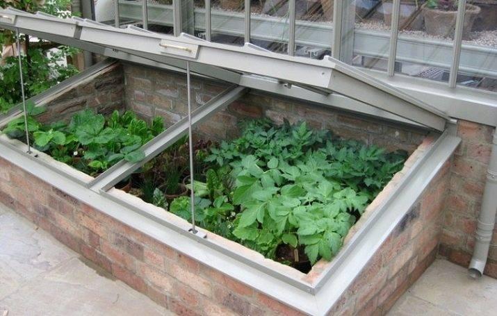 Выращивание перцев в парнике - как правильно сформировать куст (110 фото)
