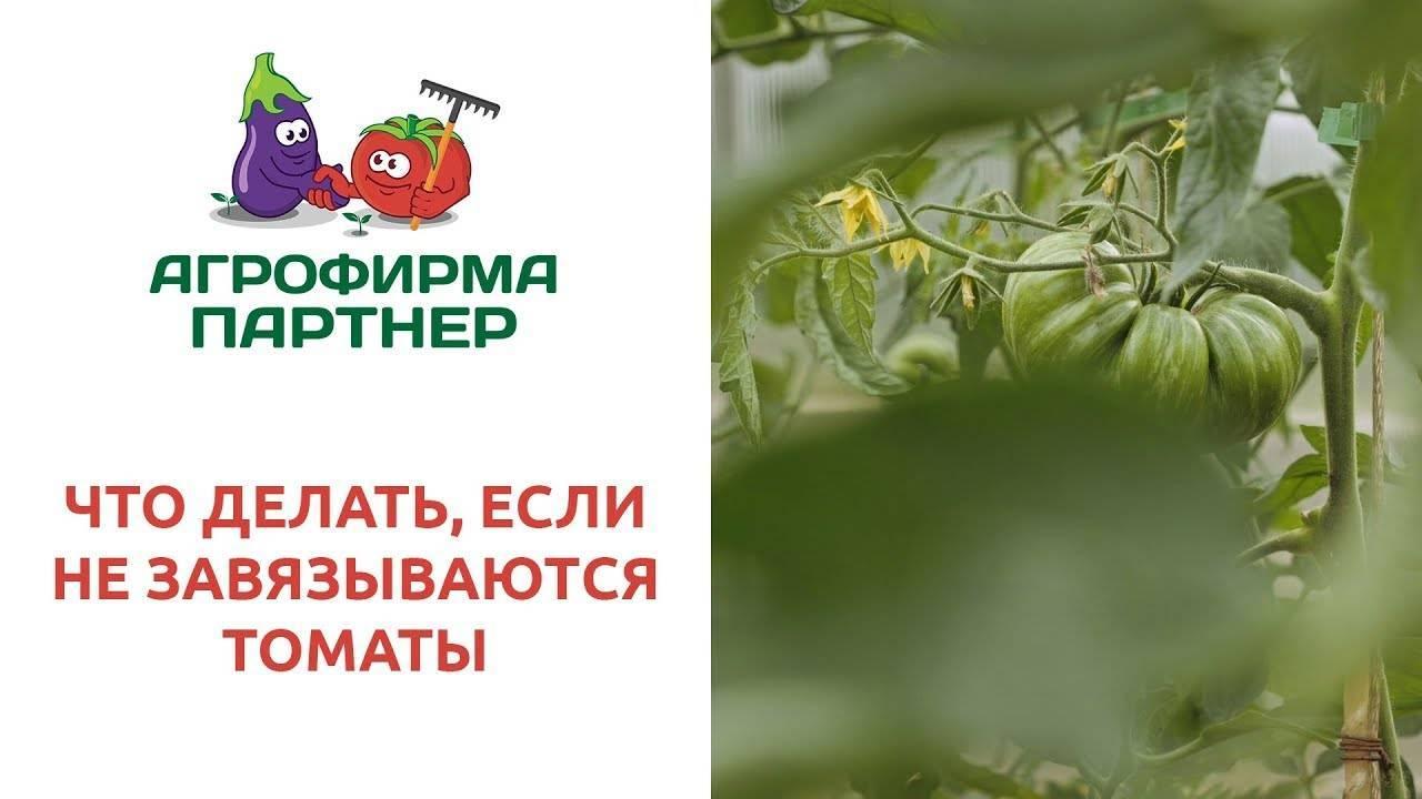 Помидоры цветут, но не завязываются - что делать, и как предотвратить?