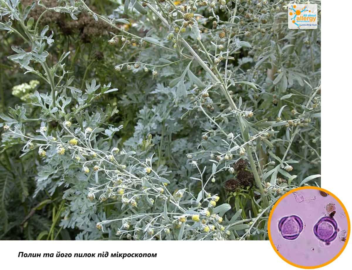 Аллергия на пыльцу (сенная лихорадка) – симптомы, лечение, советы  - причины, диагностика и лечение