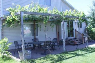 Как украсить сад с помощью навеса для винограда