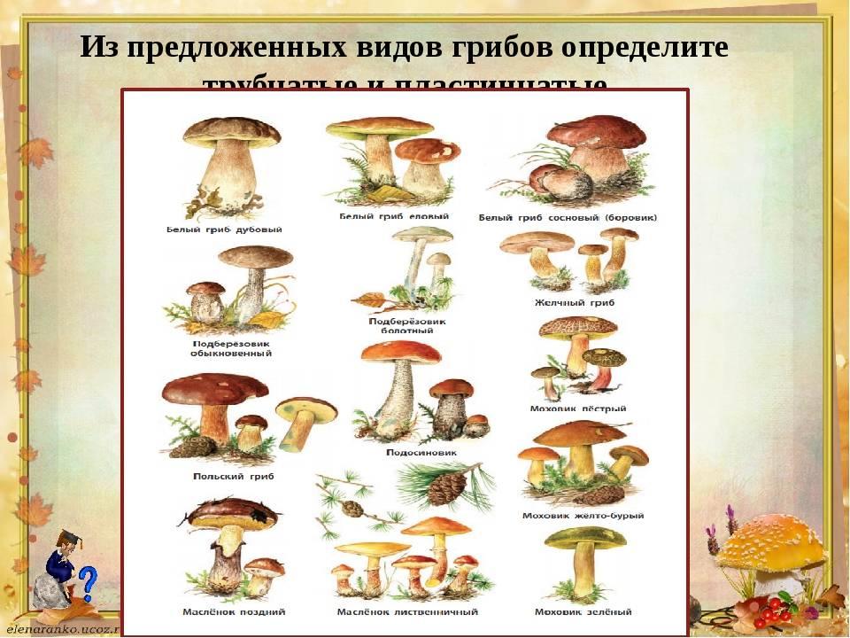 Микориза – симбиоз гриба и растения   allbreakingnews.ru