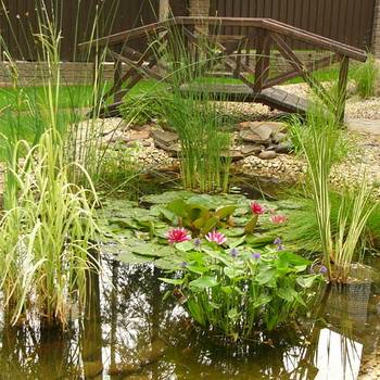 Какие растения посадить на даче в пруду и на берегу: названия с фото