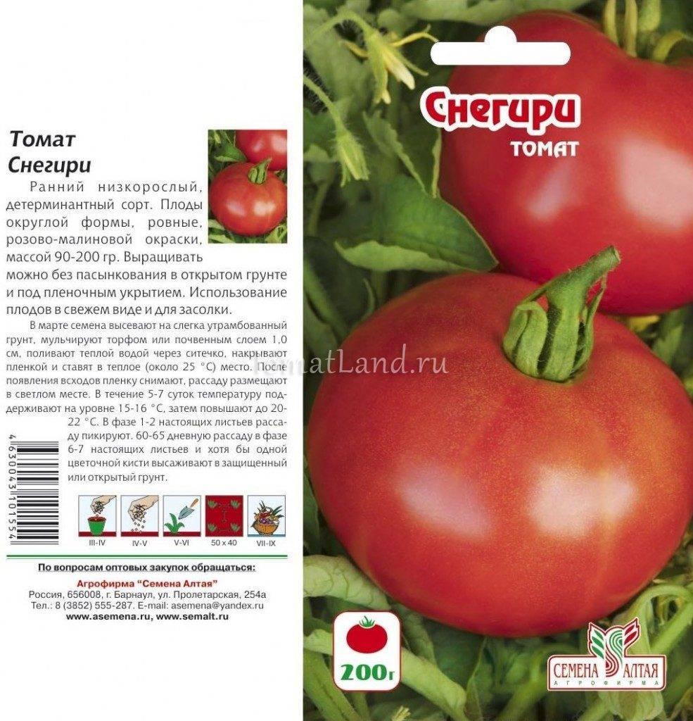 Характеристика томатов сорта Снегирь