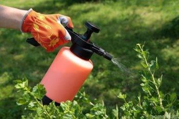 Правила и нормы применения борной кислоты для опрыскивания перца