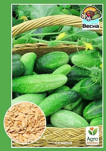 Огурец зеленика f1: отзывы и фото семян семко, описание сорта, посадка и уход