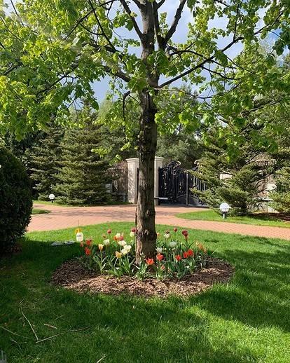 Нужно ли перекапывать приствольные круги плодовых деревьев? – дачные дела
