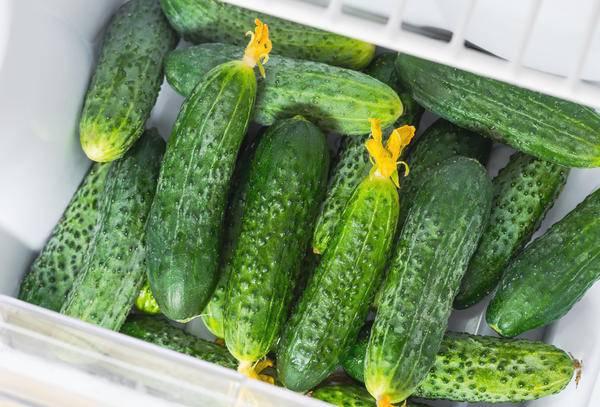 Как правильно долго хранить свежие огурцы: в холодильнике, в домашних условиях