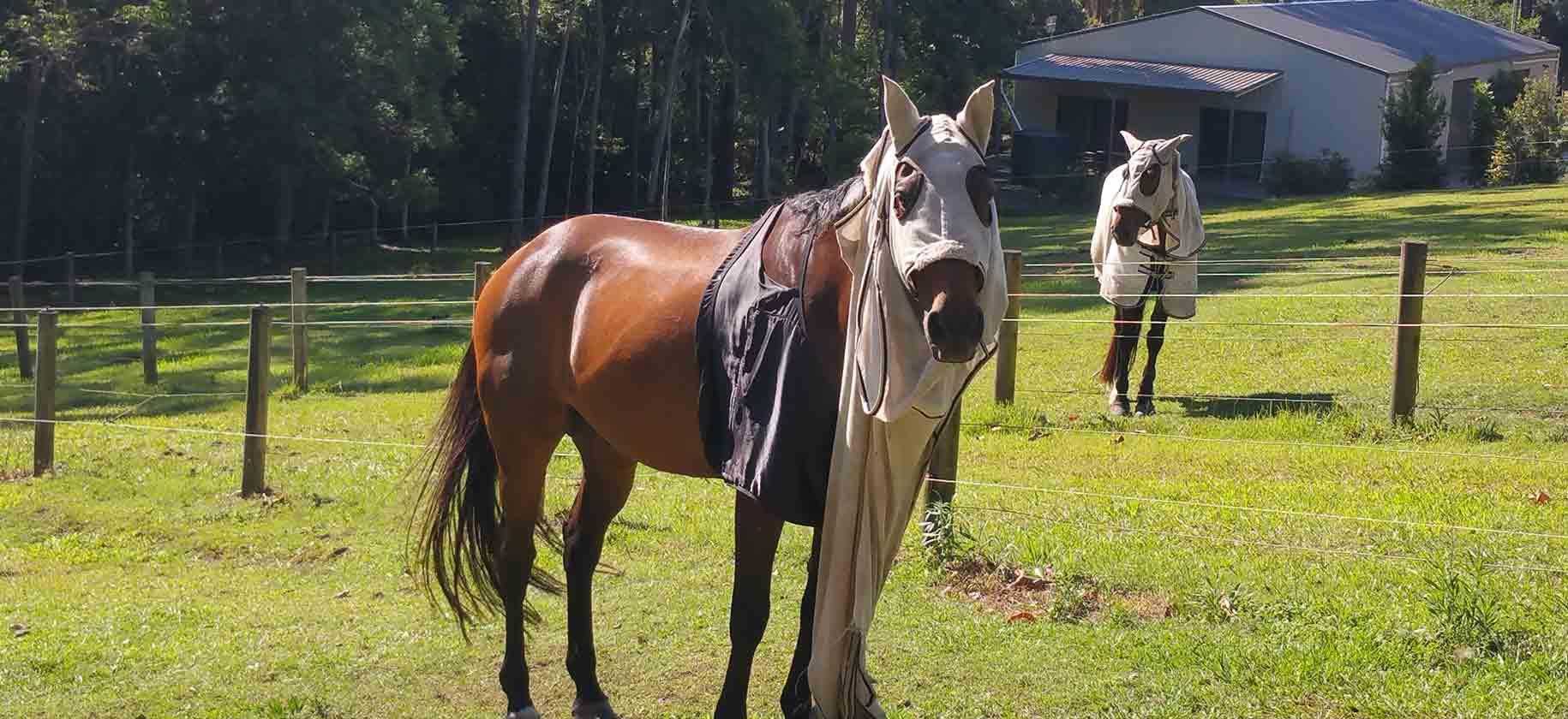 Обзор конной амуниции. базовый набор для лошади