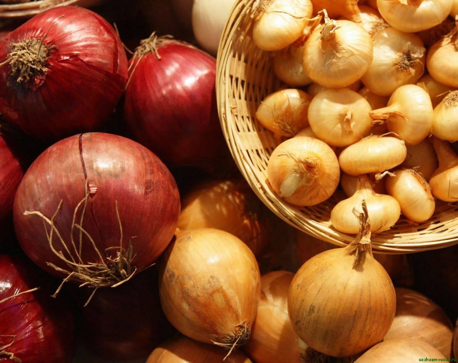 Семейный лук: особенности агротехники, описание сортов и ухода, фото урожая