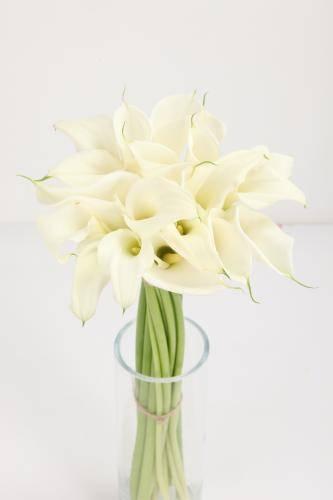Цветок калла в горшке: посадка и уход в домашних условиях