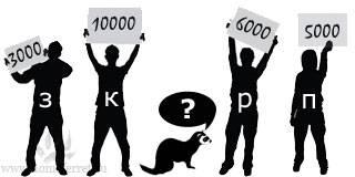 Сколько стоит хорек в зоомагазине или у частного лица