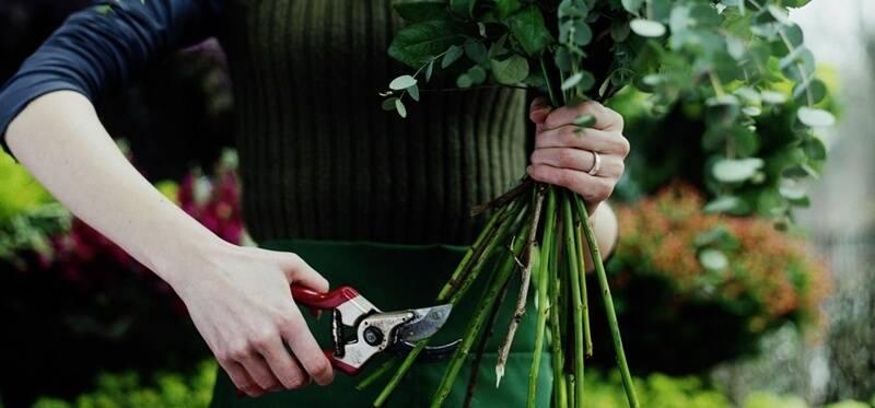 Как сохранить срезанные розы в вазе как можно дольше