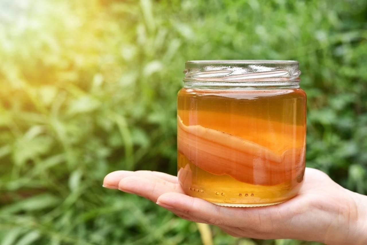 Как вырастить чайный гриб в домашних условиях: лучшие способы и советы начинающим (105 фото)