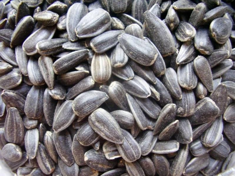 Как быстро очистить тыквенные семечки от кожуры? / асиенда.ру