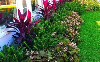 Растения для рабатки