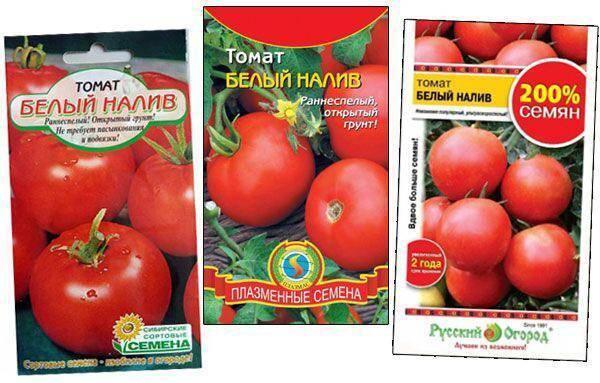 """Томат """"белый налив 241"""": описание и характеристика сорта, фото и особенности выращивания помидор русский фермер"""