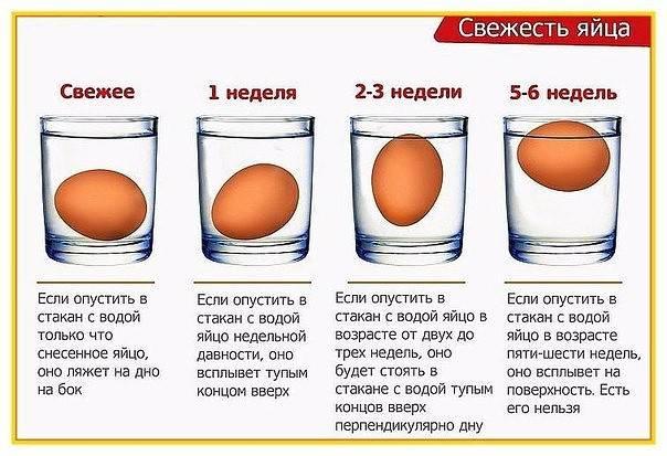 Инкубация индюшиных яиц: в домашних условиях, режим инкубации, таблица