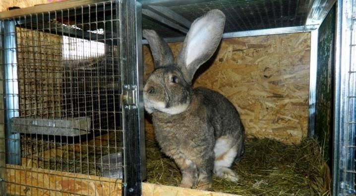 Содержание кроликов зимой на улице - можно ли?