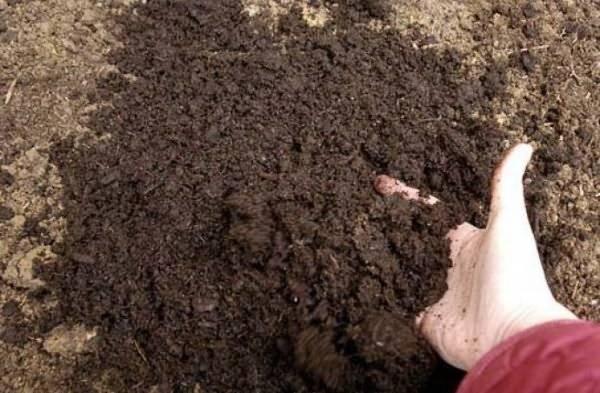 Обеззараживание почвы: основные методы дезинфекции
