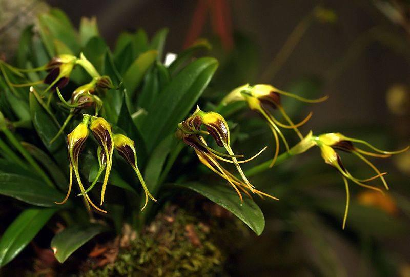 Посадка и уход за орхидеей в домашних условиях: как не совершить ошибку?