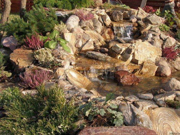 Растения для альпийской горки — фото и названия цветов, которые подойдут для альпинария