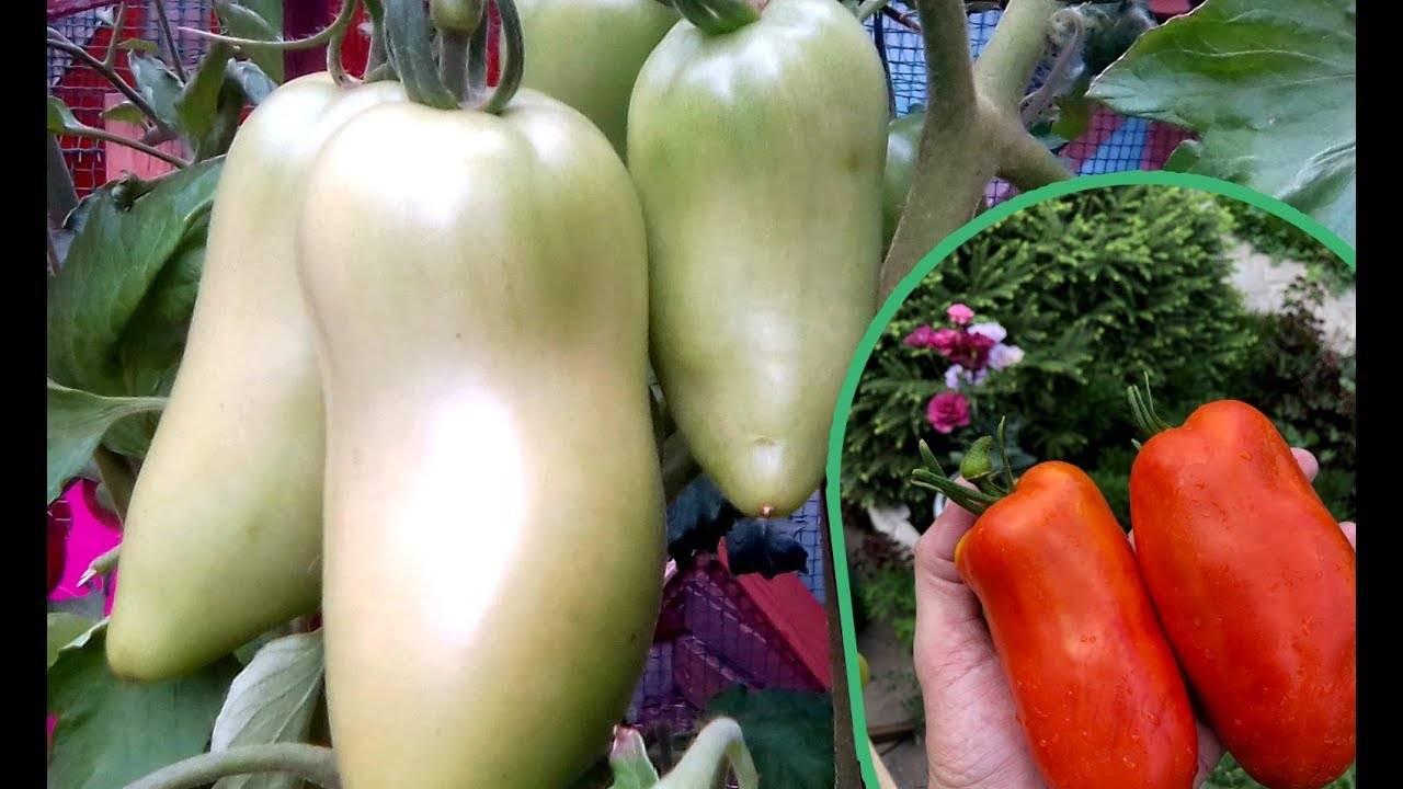 Описание сорта томата Карнабель — как поднять урожайность