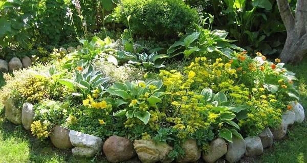 Молочай садовый, многолетний: посадка и уход, выращивание и размножение сорта в открытом грунте, фото, сочетание в ландшафтном дизайне
