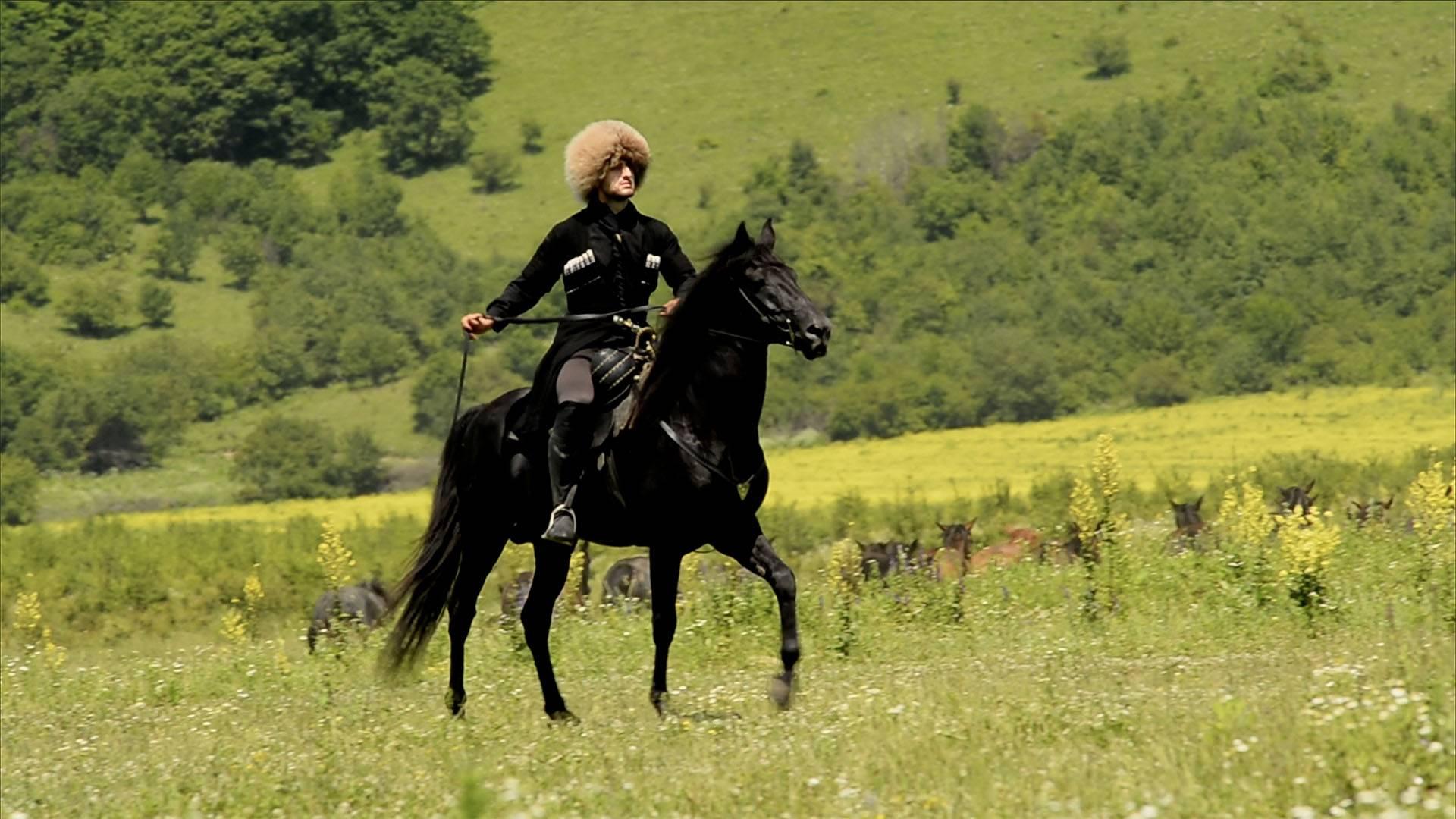 Кабардинская лошадь: особенности породы и уход