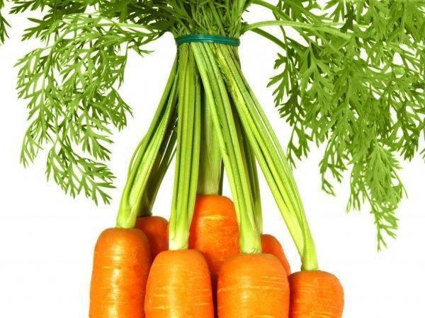 Химический состав и пищевая ценность моркови