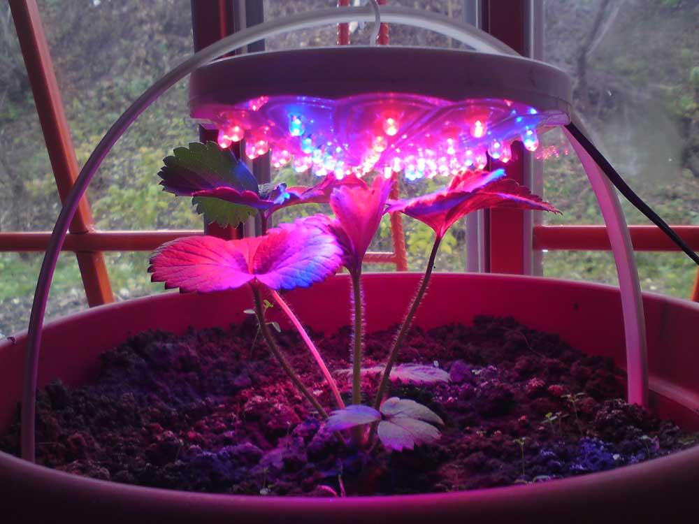 Фитолампа для растений: как сделать своими руками и установить дома и в теплице