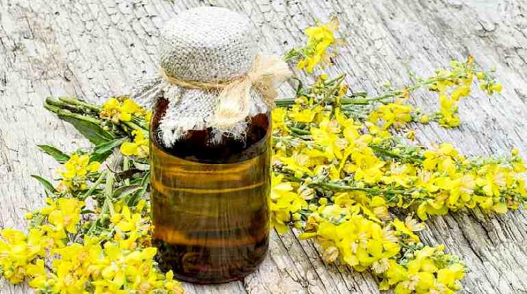 Рыжиковое масло: полезные свойства, вред и противопоказания