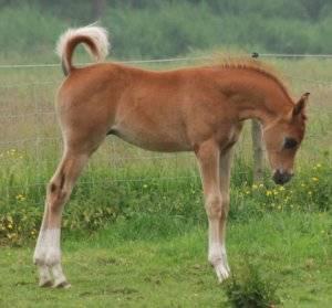 Уход за лошадьми: уход, питание, прогулки, уход за жеребенком, фото