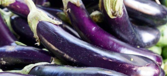 Баклажан бибо: описание сорта, фото, отзывы, характеристика, особенности выращивания, достоинства и недостатки