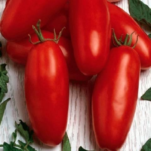 Характеристика томата алый мустанг и выращивание рассадным методом
