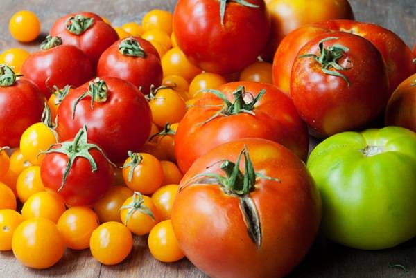 Самые урожайные томаты для подмосковья