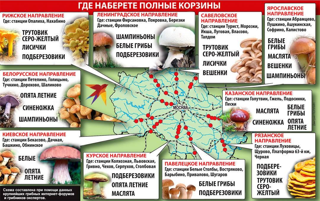 Биолог посоветовал грибные места в подмосковье: карта прилагается