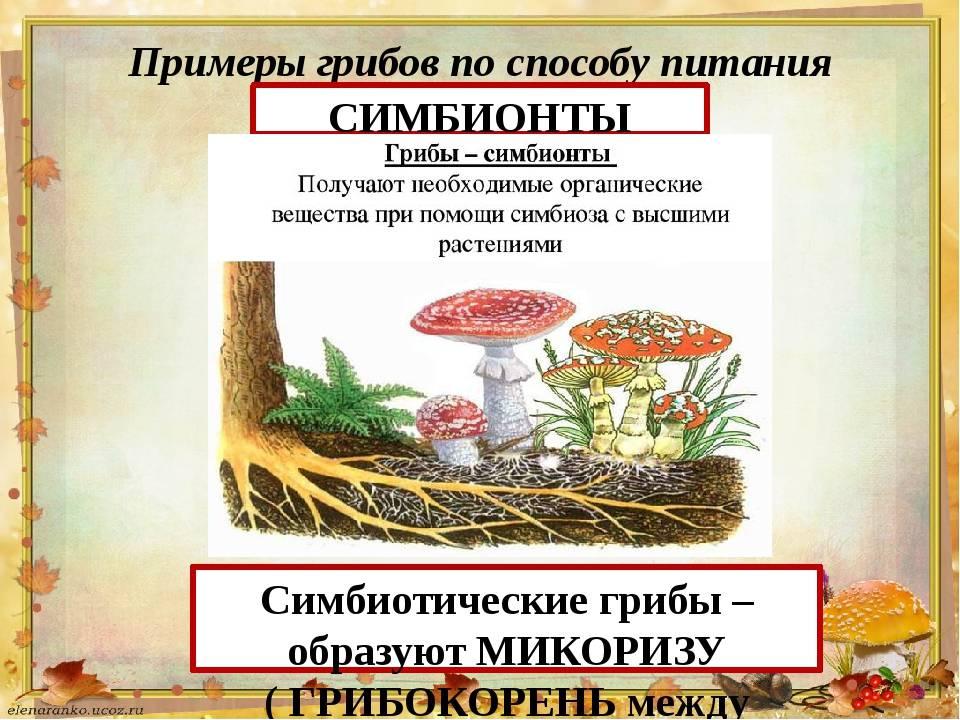 Грибы-симбионты: примеры