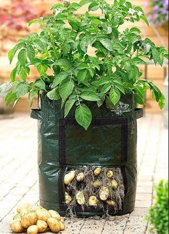 Выращивание картофеля в мешках: инструкция, секреты и советы + видео