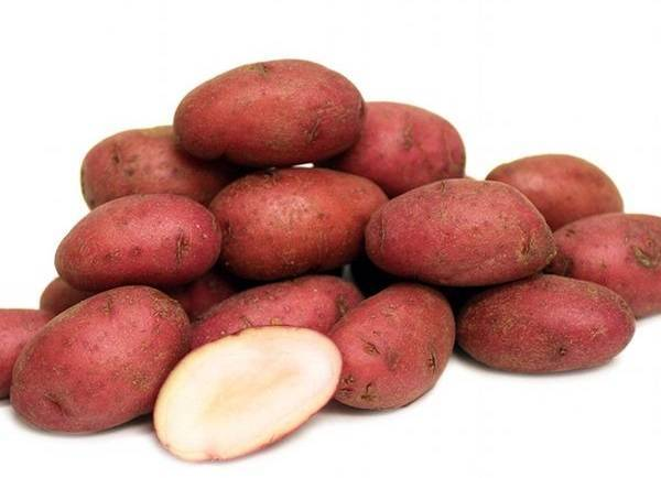 ᐉ сорт картофеля «ассоль» – описание и фото - roza-zanoza.ru
