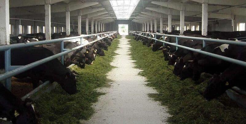 Коровник — типовой проект, размеры, нормы, оборудование для коровников.   cельхозпортал
