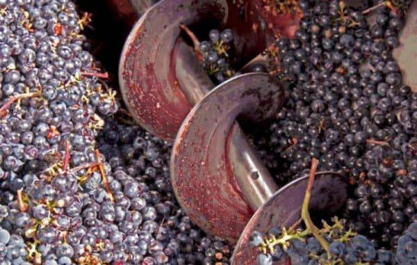 Давилка для винограда: как сделать её своими руками из подручных материалов