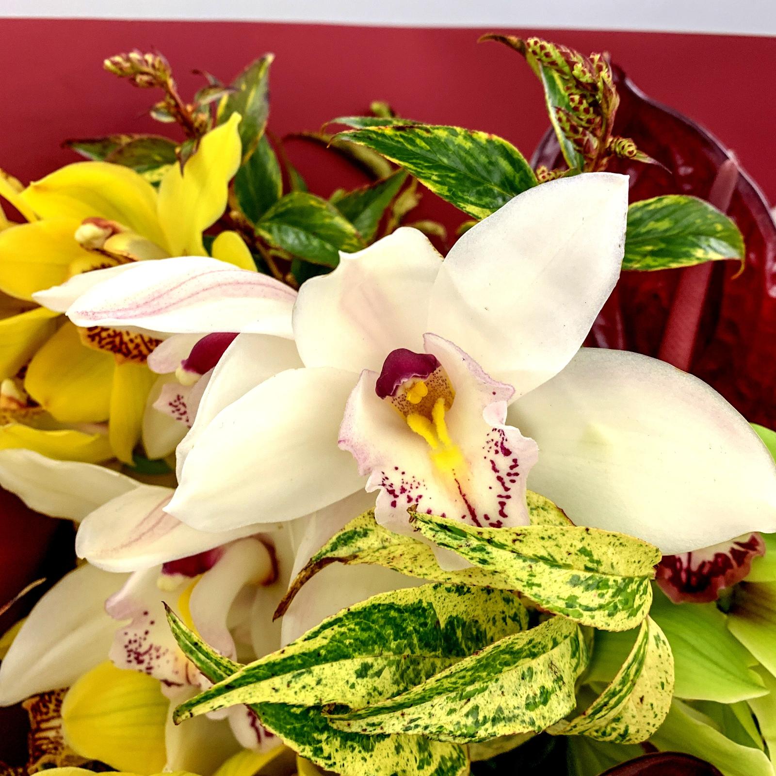 Как ухаживать за орхидеями, чтобы они цвели в домашних условиях и как правильно поливать?