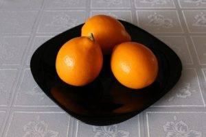 35 сортов комнатных лимонов, фото и описание. комнатные растения