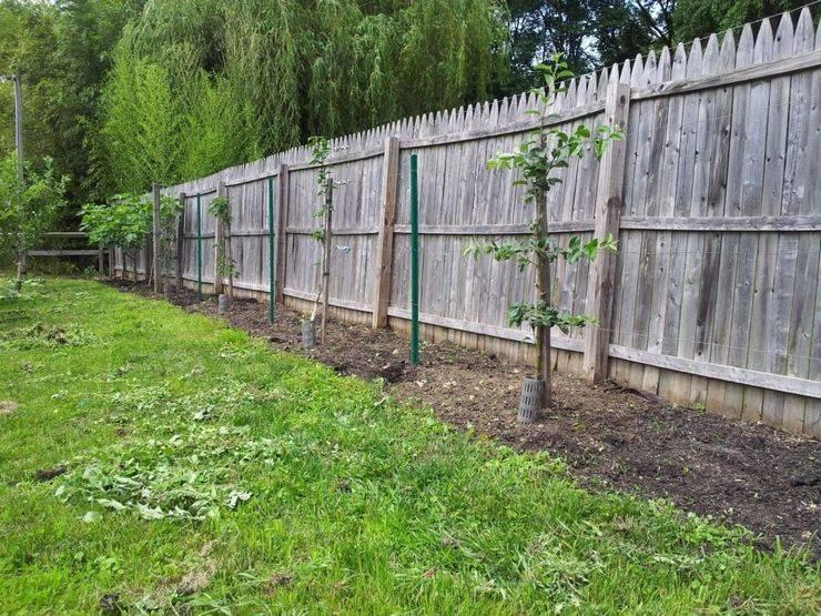 Как правильно посадить грушу весной, пошаговое руководство, в том числе как сажать в средней полосе, инструкция посадки + видео