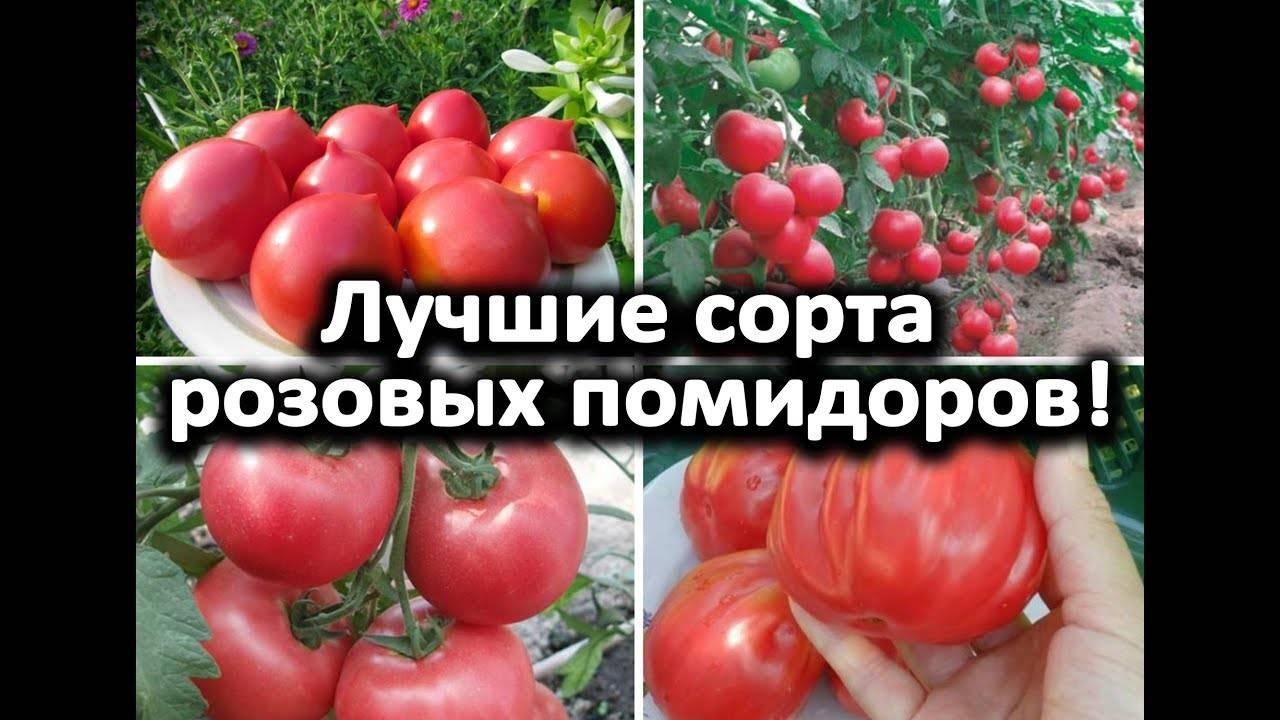 """Томат """"груша красная"""": отзывы, фото, описание"""